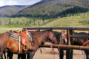 Parade Rest Ranch - trail rides for all ages