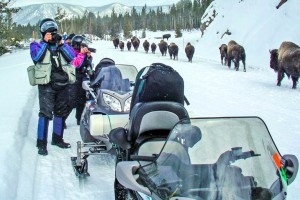 SeeYellowstone Snowmobile Tours of Yellowstone :: For nearly 45 years, we have introduced dozens of thousands of guests into Yellowstone's winter wonderland atop snowmobile. Click to see our packages, rates & sled types.