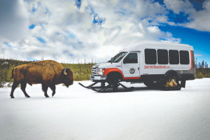 Yellowstone Alpen Guides - winter packages