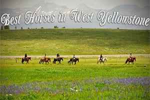 Diamond P Ranch - trail rides & more