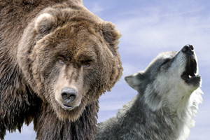 Grizzly & Wolf Center