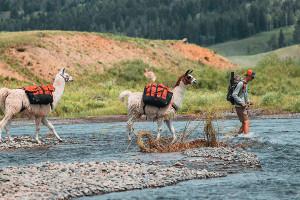 Wildland Trekking - Yellowstone llama trips