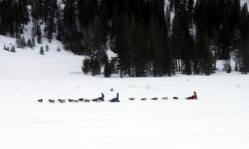 Dog Sled Sledding Lake Tahoe