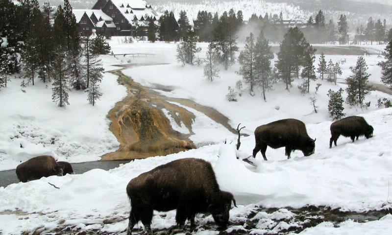 Yellowstone Park In Winter Alltrips