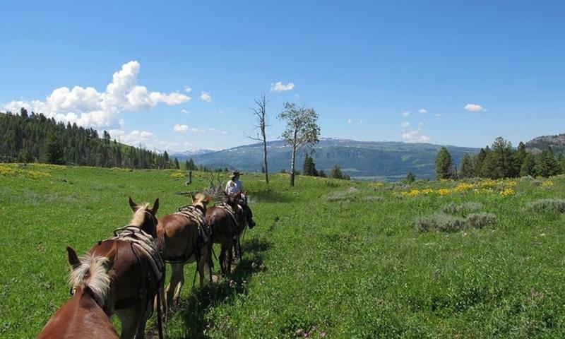 Horseback Riding near Hellroaring Creek in Yellowstone