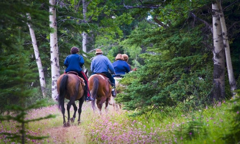 Horseback Riding through a Dense Forest